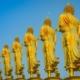 Der Weg der Buddhas